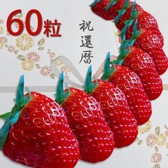 還暦祝い 朝採れ苺 紅ほっぺ いちご大粒サイズ 60...