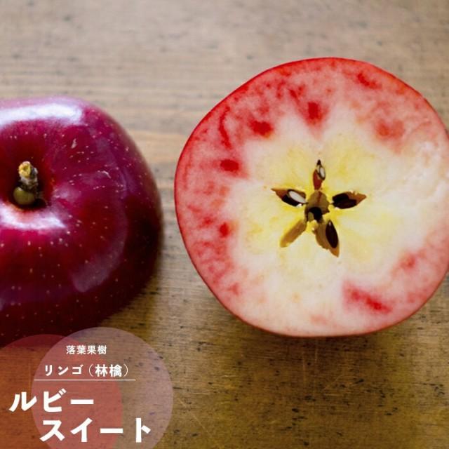 果樹苗 りんご 苗木  ルビースイート 2年生 挿し...