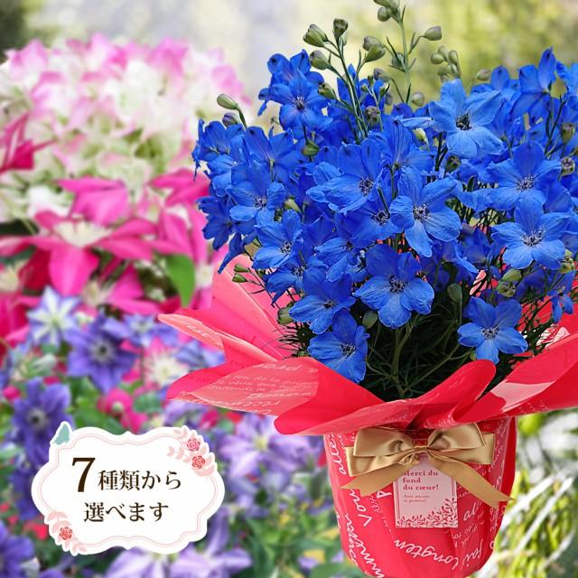 母の日 鉢植え 花 プレゼント ギフト クレマチス ベゴニア ブーゲンビリア など 7種類から選べる こだわりラッピング 全国送料無料