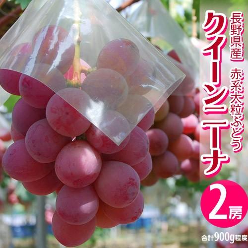 ブドウ ぶどう 葡萄 送料無料 長野県産 赤ぶどう ...