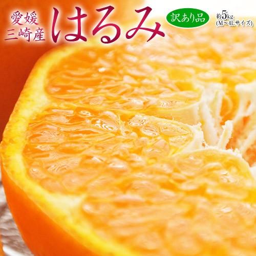 柑橘 送料無料 みかん 愛媛県 三崎産 訳あり はる...