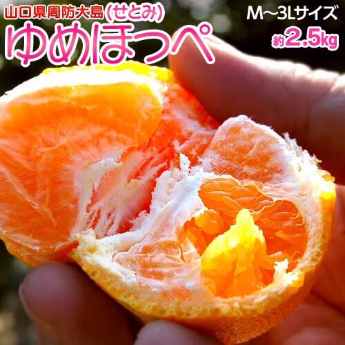 柑橘 みかん 山口県産 ゆめほっぺ M〜3L 約2.5kg ...