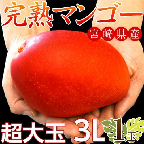訳あり マンゴー 宮崎 超大玉 完熟 マンゴー 3L ...