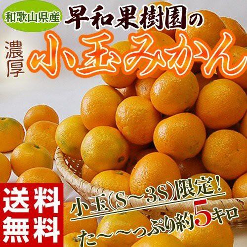 みかん ミカン 蜜柑 和歌山県産 早和果樹園の小玉みかん S〜3Sサイズ限定 約5kg 送料無料