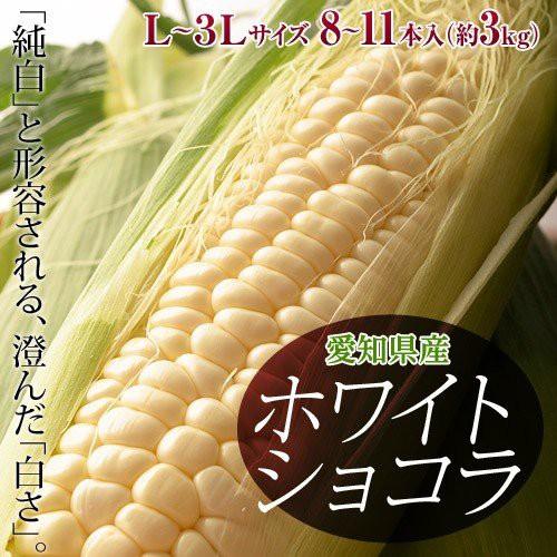 愛知県産 トウモロコシ 『ホワイトショコラ』 8〜...