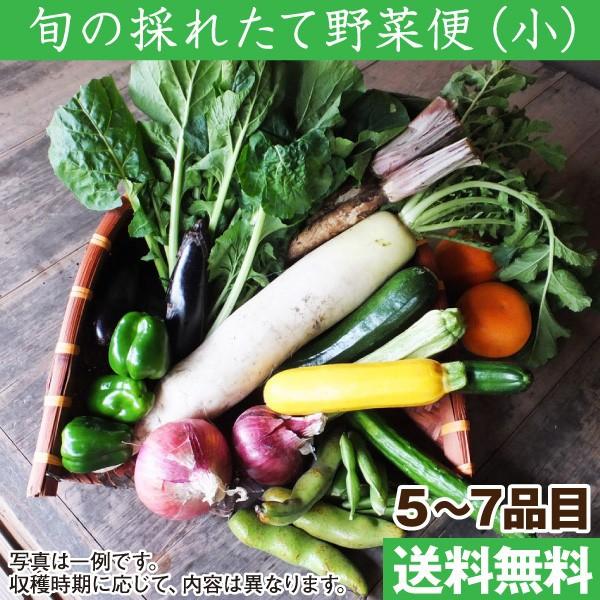 旬の採れたて野菜便セット(小)(野菜5〜7品目) ...