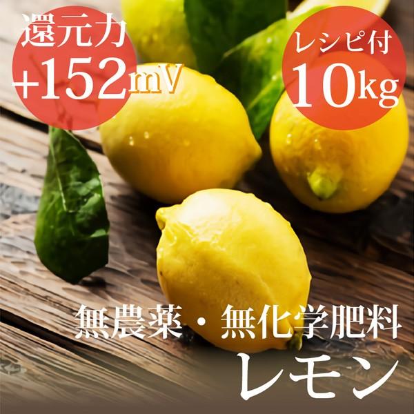 レモン10kg ヴィーガンレシピ付き 無農薬・無化学...