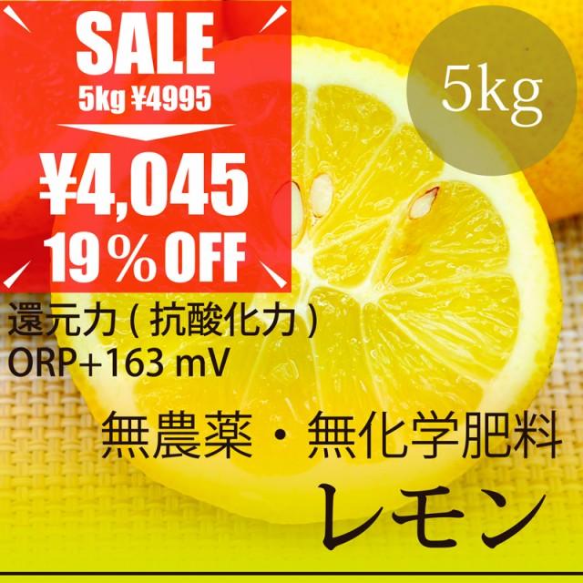 希少! 無農薬レモン 5kg 熊本県産 無農薬・無化...
