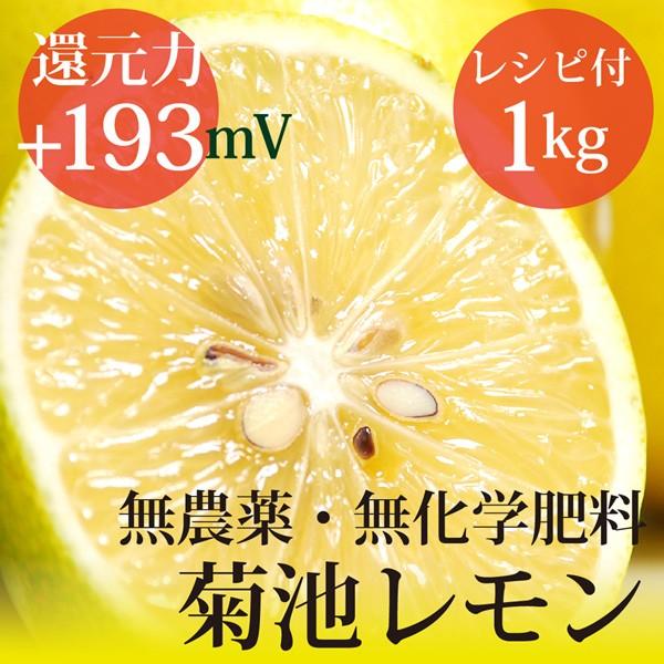 小笠原の菊池レモン1kg 無農薬・無化学肥料  ヴィ...