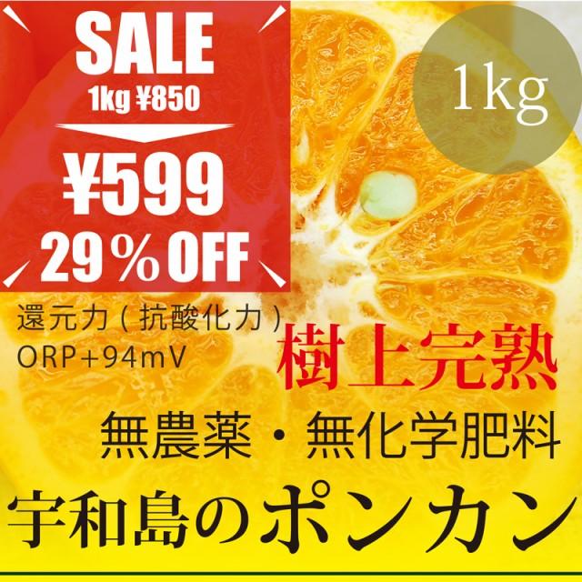 今だけ29%OFF 宇和島のポンカン 1kg 樹上完熟・愛...