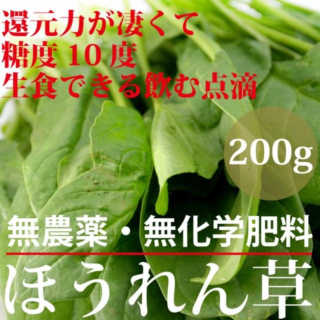 【還元力−21mV】【糖度10度】生食できるホウレン...