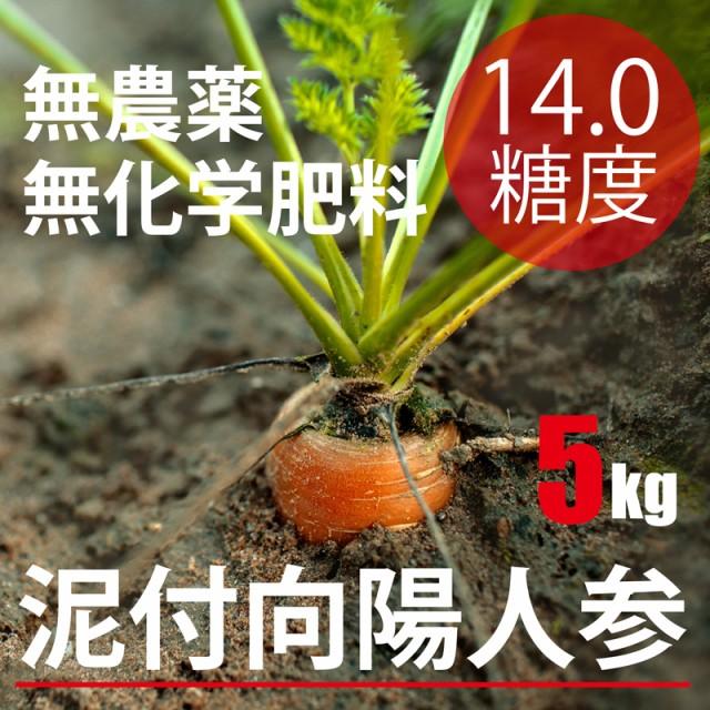 【最高糖度14度】 泥付向陽にんじん5kg千葉県 無...