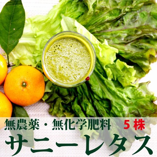 無農薬・無化学肥料サニーレタス 5株(千葉産・放...