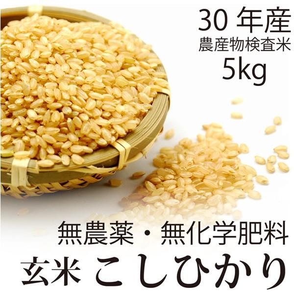 【30年産 新米】飛竜コシヒカリ玄米 5kg 無農薬・...