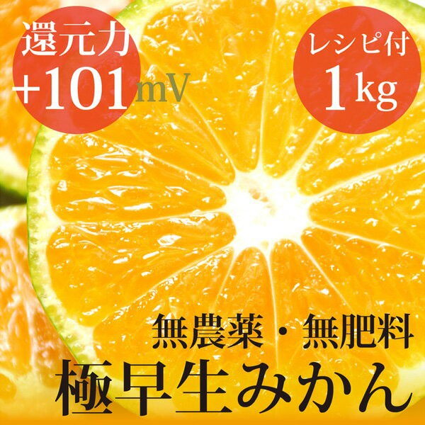 極早生みかん 1kg ヴィーガンレシピ付き 自然栽培...