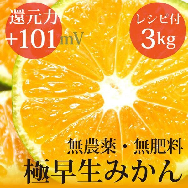 極早生みかん 3kg ヴィーガンレシピ付き 自然栽培...