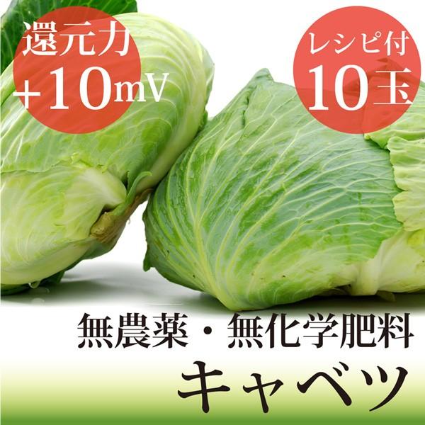 キャベツ10玉 無農薬・無化学肥料・ヴィーガンレ...