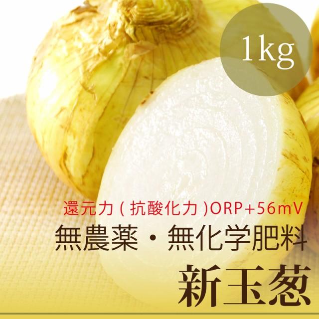 今だけ10%OFF 新玉ねぎ 1kg 熊本県・無農薬・無...