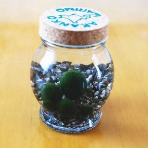 養殖まりも5個いり ミネラル鉱石入り ガラス瓶...
