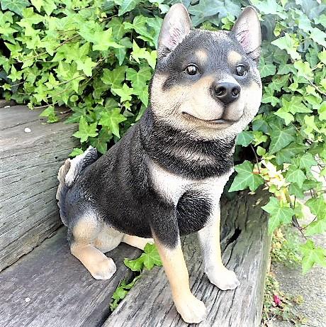 犬の置物 黒柴犬 13183 いぬ イヌ 動物 オー...