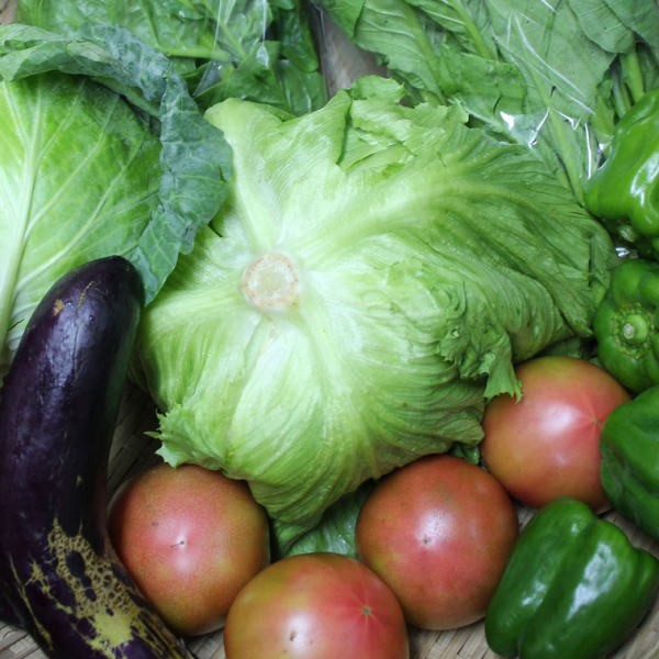 沖縄の野菜 7種類セット (種類はお任せ) 【...