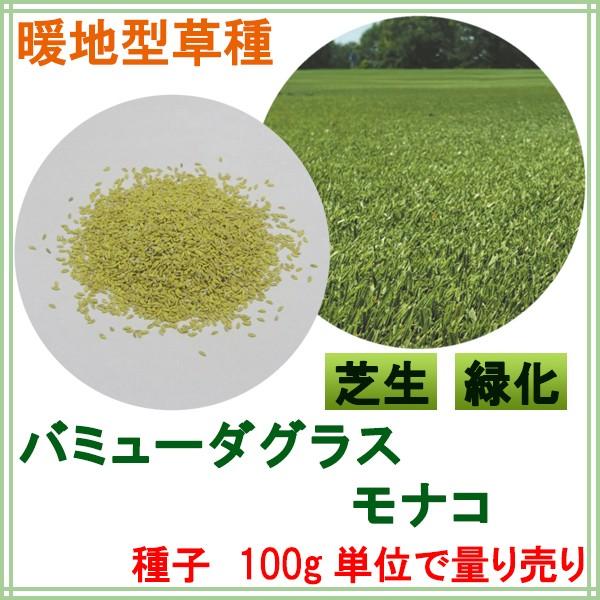 コート種子 バミューダグラス モナコ 100g
