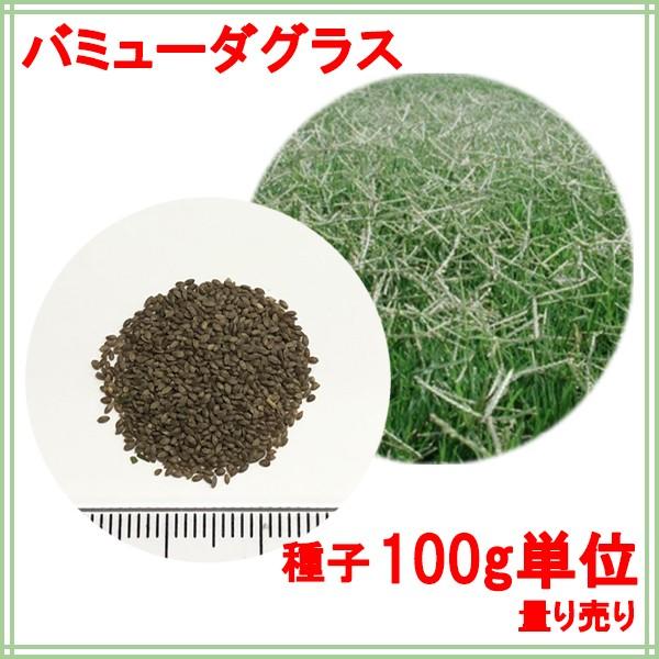 種子 バミューダグラス 100g