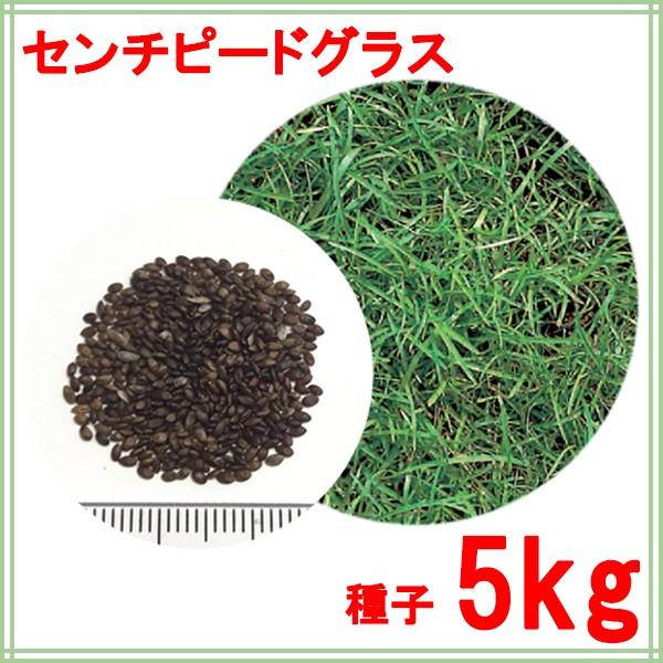 種子 センチピードグラス 5kg