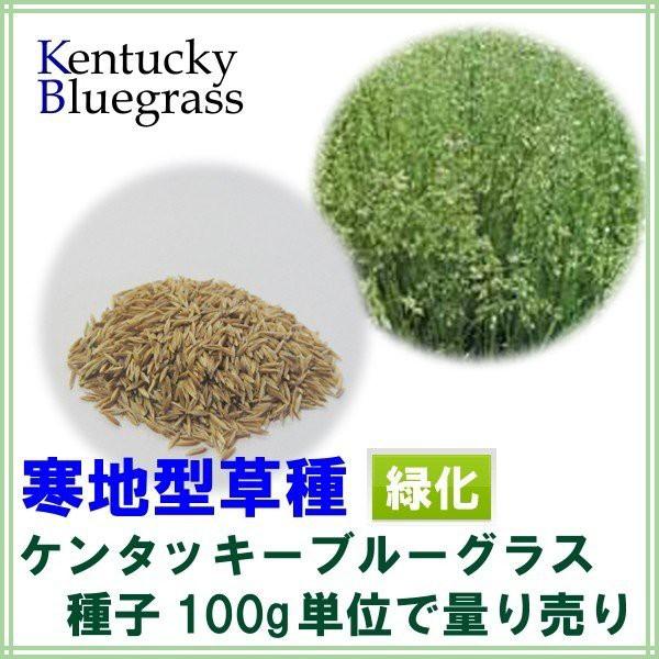 種子 ケンタッキーブルーグラス 100g