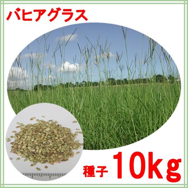 種子 バヒアグラス 10kg