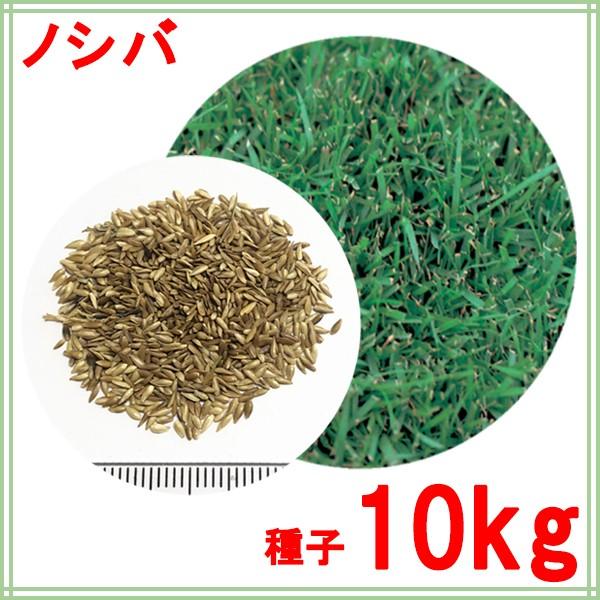 種子 ノシバ 10kg