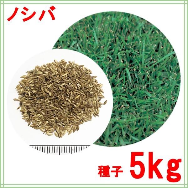 種子 ノシバ 5kg