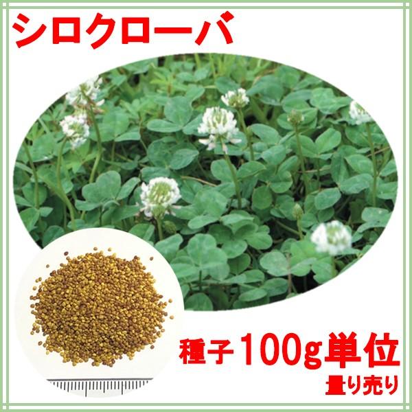 種子 シロクローバ 100g