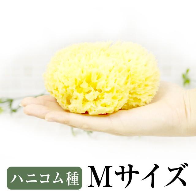天然海綿スポンジ/高品質シチリア産/ベリーニ社/...