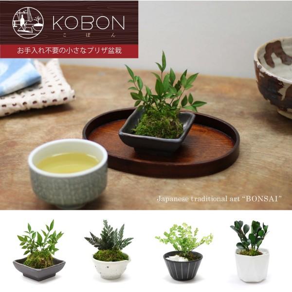 〜お手入れ不要の小さなプリザ盆栽〜 KOBON(こぼん)