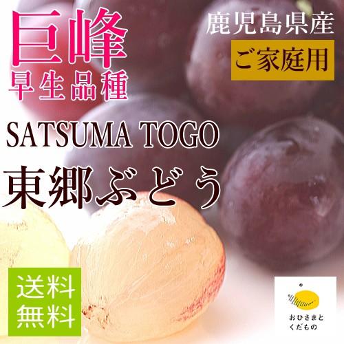 【ご家庭用】【7月末より収穫開始】巨峰6袋(約2k...