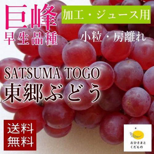 【加工・ジュース用】【7月末より収穫開始】巨峰3...