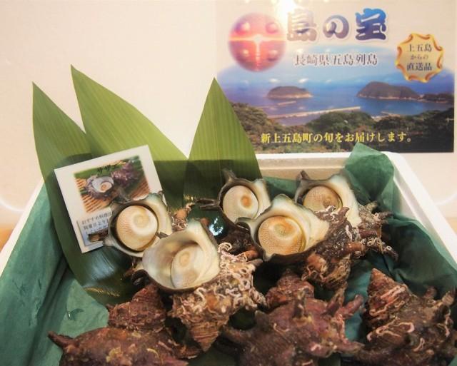 五島列島直送!天然サザエパック(1kg 6〜8個)