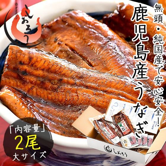 うなぎ 蒲焼き 国産 無頭 鹿児島県産 大サイズ 16...