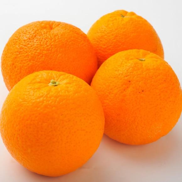 南国フルーツ・オーストラリア産オレンジ20玉 (1...