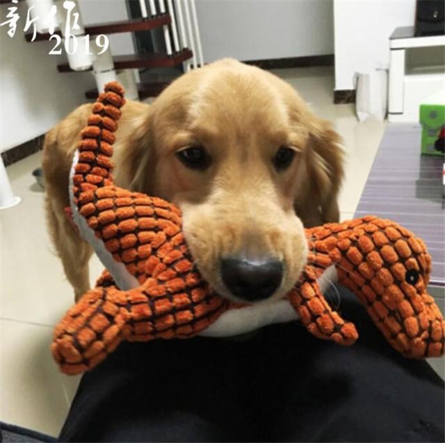 ペット おもちゃ 犬用 噛むおもちゃ 犬用おもちゃ...