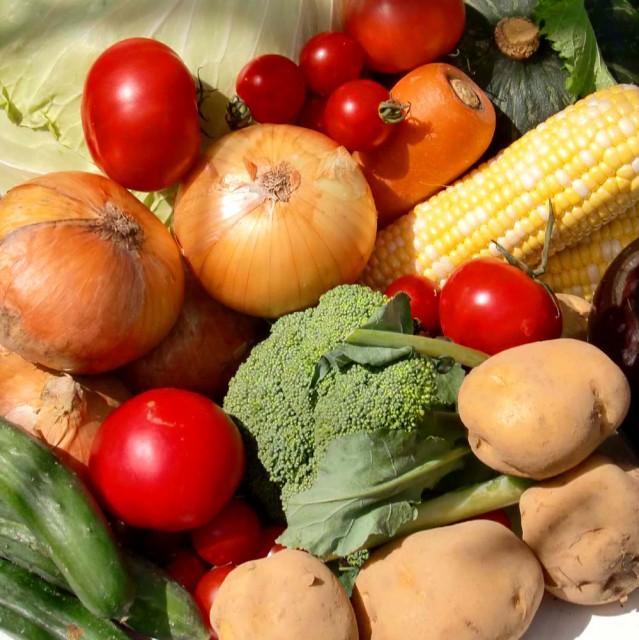 むつみ屋 旬の有機野菜セット 13品