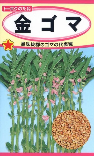 【種子】金ゴマ トーホクのタネ