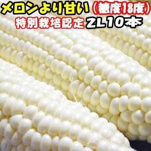 出荷中 とうもろこし 北海道 甘い メロンより甘い 安心の特別栽培認定 生で食べれる 白い トウモロコシ 平均糖度18度 ホワイ