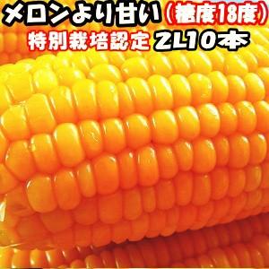 出荷中 とうもろこし 北海道 甘い メロンより甘い 安心の特別栽培認定 朝どれ 生で食べれる トウモロコシ 平均糖度18度 夢の