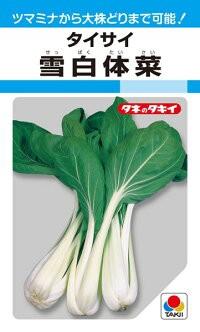 タキイ種苗 葉菜 雪白体菜 MF