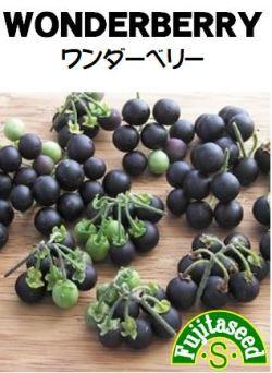 藤田種子 ワンダーベリー 小袋