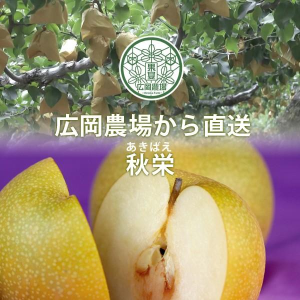 広岡農場の秋栄(あきばえ)5kg詰(14〜20玉入) ...