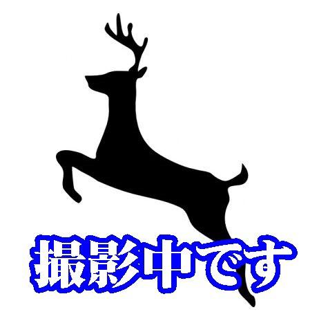 【送料無料】【長州ジビエ】【静食品】下関産【鹿...