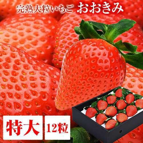 【2021年4月上旬より順次発送】特大サイズ 12粒 380g以上(1粒あたり30〜39g) 高級大粒いちご おおきみ イチゴ 苺 超大きくて甘い タルト